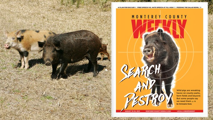 Image caption: In its Aug. 19 issue, Monterey County Weekly explores the four-legged vandals who are wreaking havoc in parks, fields and forests.