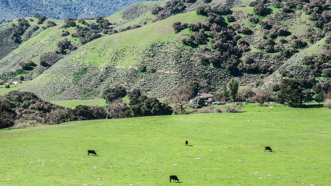 Image caption: RCDs look after the land, whether it's used for grazing, growing, or getting out into nature.