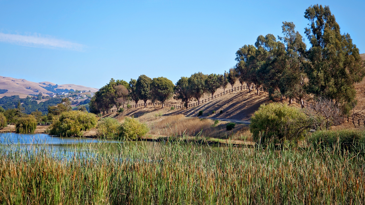 A picture of a park in Milpitas.